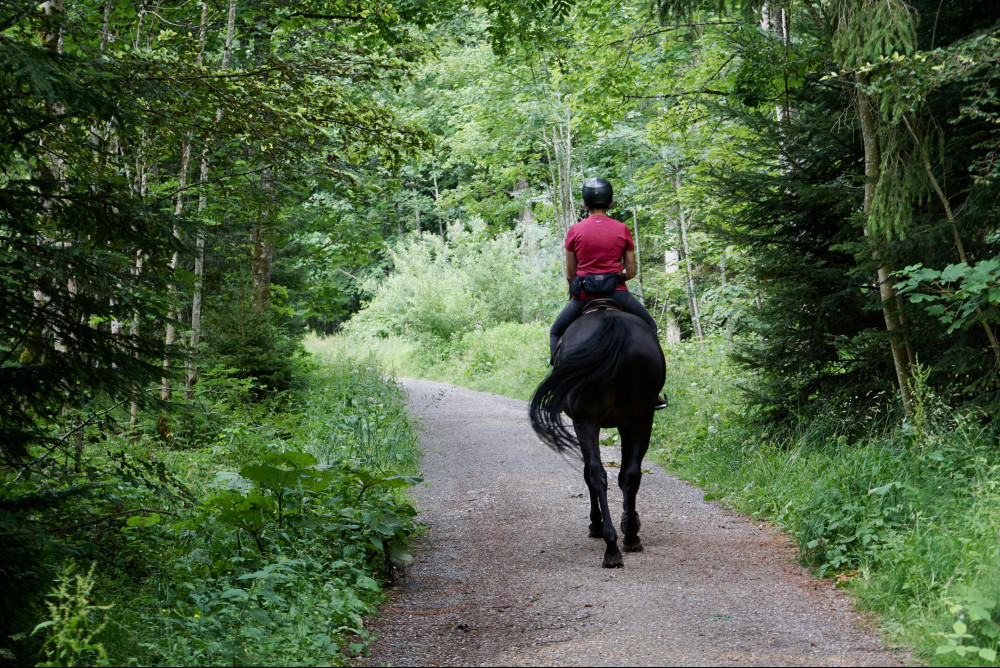 Home-Health-Care-Consultants-Office-Manager-Unit-Horseback-Riding