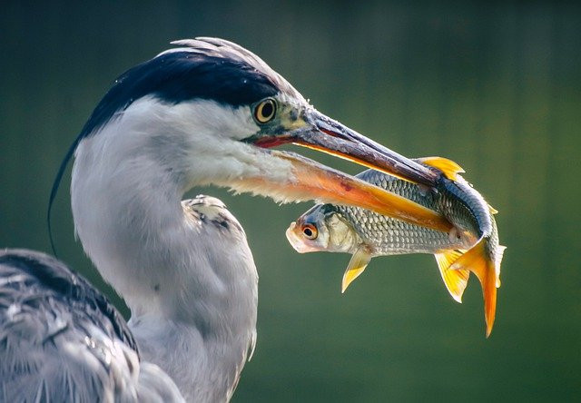 What's-the-Definition-of-Ecosystem-Meaningful-Connections-Bird-Hunting-Fish